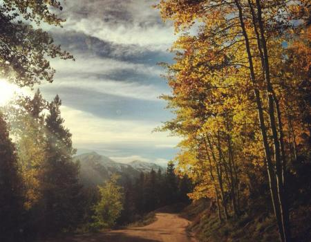 Boreas Pass Road | Breckenridge Fall Colors | Paragon Lodging