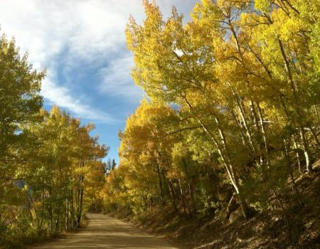 Boreas Pass Road Fall Colors | Breckenridge, CO | Paragon Lodging