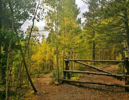French Gulch Hiking Trail | Breckenridge, CO | Paragon Lodging