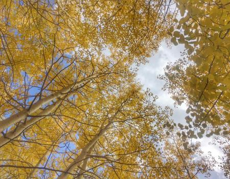 Hiking In The Aspen Trees | Breckenridge, CO | Paragon Lodging