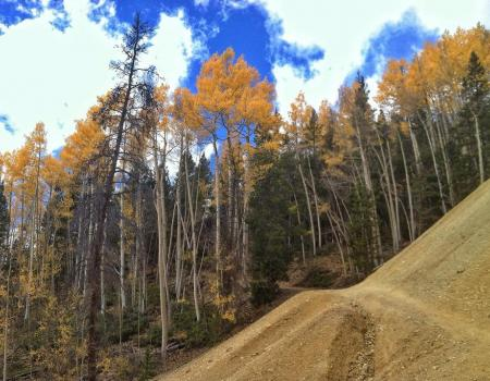 Trees on Minnie Mine Trail | Breckenridge, CO | Paragon Lodging