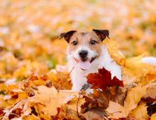 Breckenridge Fall Pet Friendly Activities | Breck Local's Guide