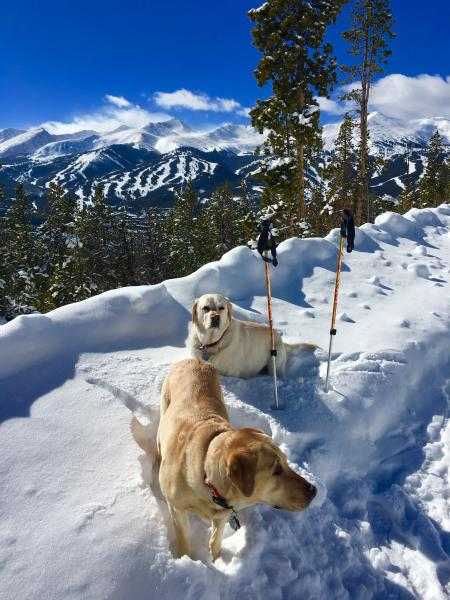 Breckenridge Pet Friendly Lodging