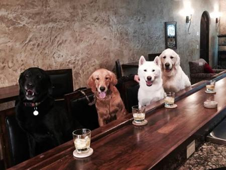 Happy Hour Dogs!