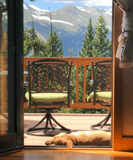 Dogs of Breckenridge